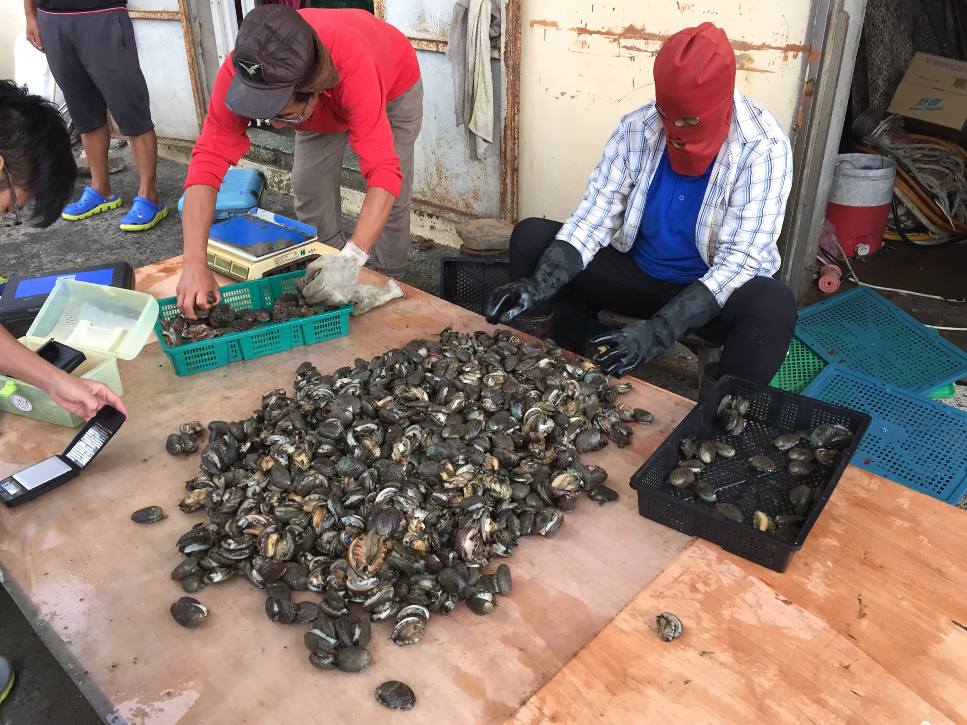 The harvested Gongliao abalone shall be classified and packed separately